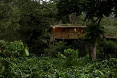 Treehouse at The Wilds At Northern Hay, Tamil Nadu, India