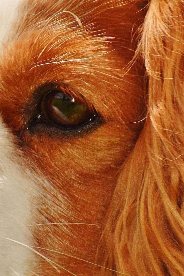 How To Make Your Dog A Service Dog Australia