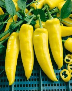 "Hungarian Yellow Wax Hot, Hot Pepper Seeds - Capsicum Annuum - 1 Grams - Approx 85 Gardening Seeds - Vegetable Garden Seed by Generic Seeds. $2.89. Capsicum annuum. Generic Seeds: The Same High Quality Seeds Made By Mother Nature Just in Cheaper Packaging. Days Until Harvest: 72. 1 Grams: Approx 85 Seeds. Germination Rate: 85% - Purity: 99% - Country of Origin: USA. The Hungarian Yellow Wax Hot pepper is a waxy yellow pepper that ripens to red-orange The 6"" fruits ar..."