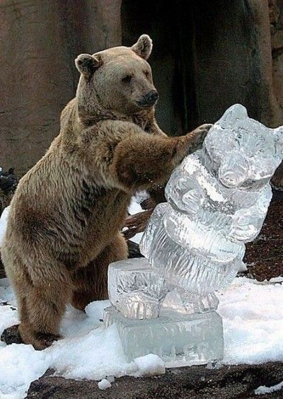 Real bear is not impressed with this ice imposter!: Polar Bears, The Real, Ice Ice Baby, Icesculptur, Funny Stuff, Ice Sculptures, Funny Animal, Brown Bears,  Bruins