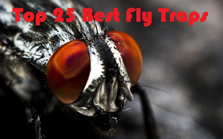 Looking for the best fly traps on the market? Checkout our ultimate guide to fly traps where we break down the top 25 fly traps!