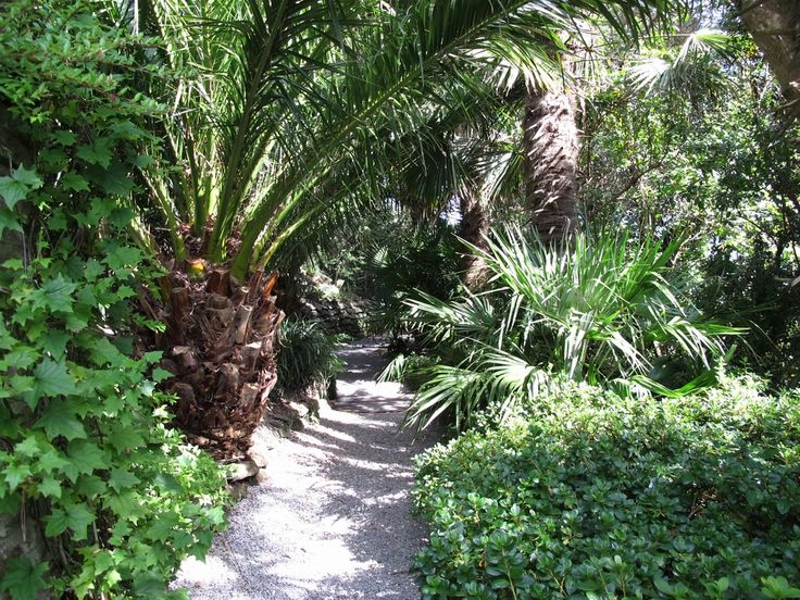 Tropical Garden Ideas Uk 469 best tropical garden images on pinterest | landscaping