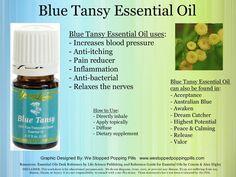 blue tansy essential oil - Google Search