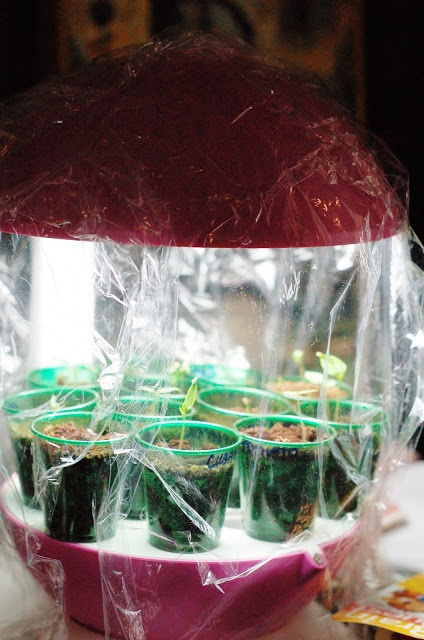 My Make-Shift Mini Greenhouse
