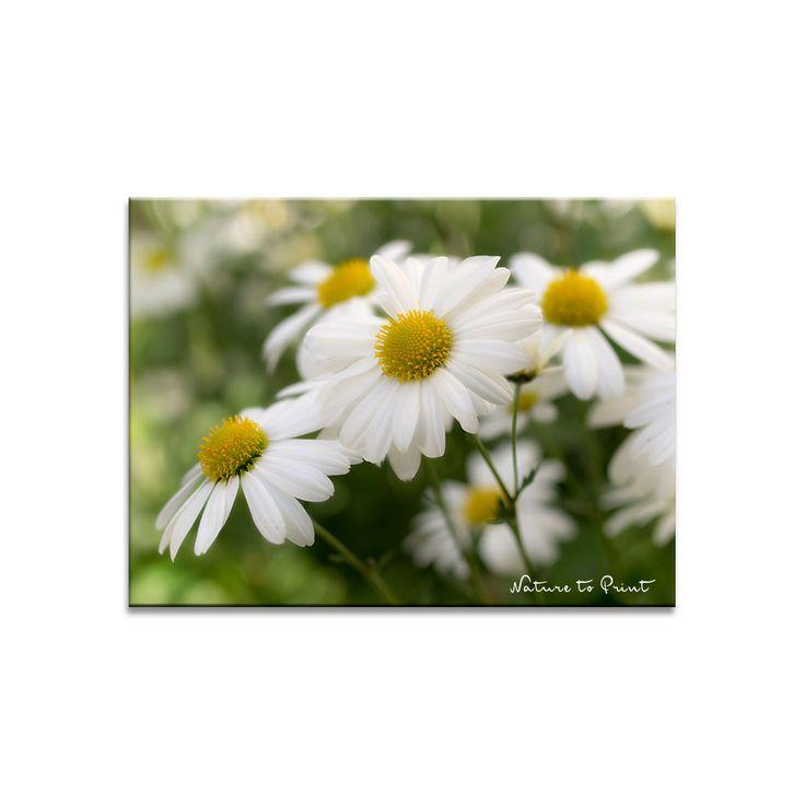 637 besten Blumenbilder Bilder auf Pinterest | Blumenbilder ...