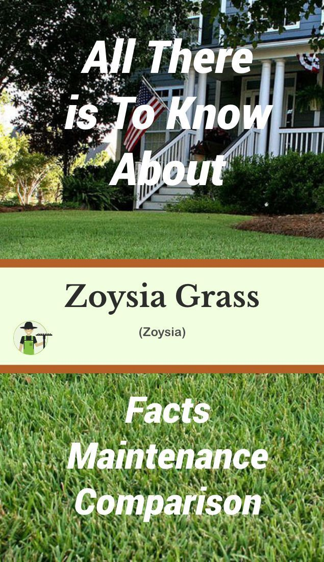 Zoysia Grass Facts, Maintenance & Comparison | Share Your