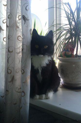 Пушистый черно-белый котенок-девочка