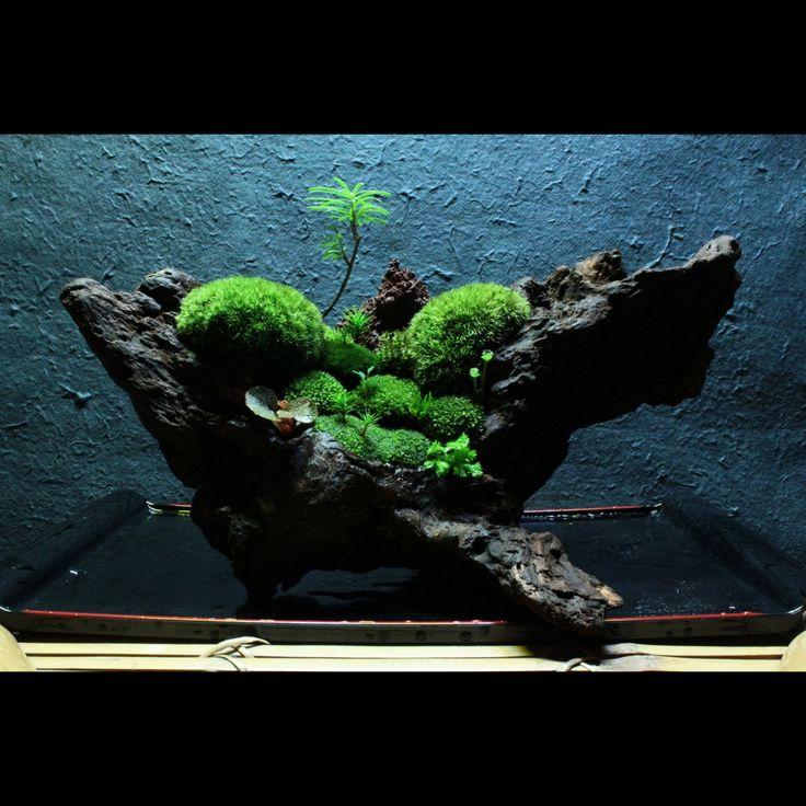 裏ワザ⑨ 癒しの苔盆栽 里山の風景 カメラ始めたばかりの頃撮った蔵出しです。の写真(画像) 写真ID:2314661- 写真共有サイト:PHOTOHITO