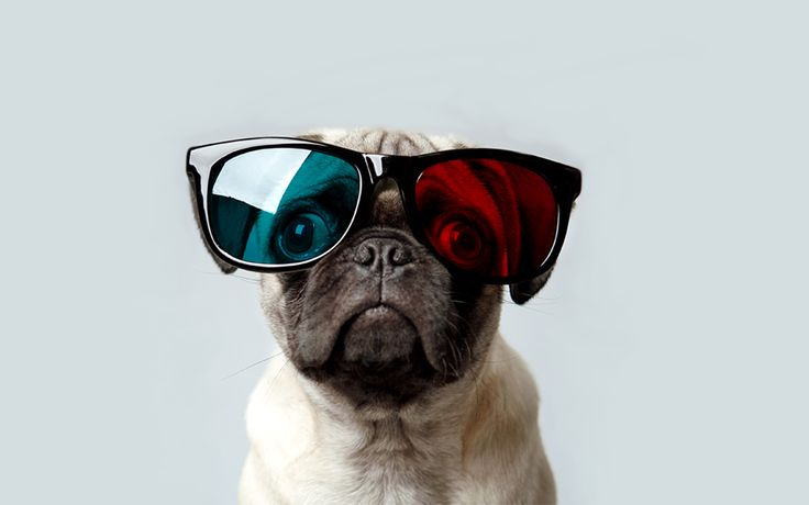 Pug Iphone Wallpaper: Best 25+ Pug Wallpaper Ideas On Pinterest