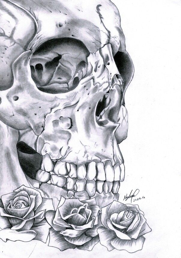 Skull and rose drawing