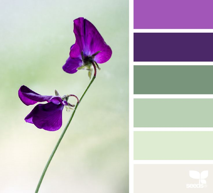 { color flora } image via: @cloverhome.nl