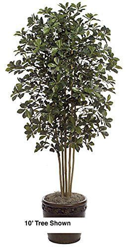 Autograph Foliages W-60275 10 ft. Black Olive Tree, Green ** More info could be found at the image url.