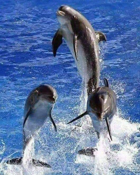 Pin Von Brigitte Bauer Auf Sweet Meerestiere Tiere Delfine Bilder