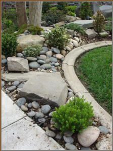 Junipers, holly, boxwood and boxleaf euonymous give this river rock, beach pebble and boulder rock garden a rugged and sturdy design feel