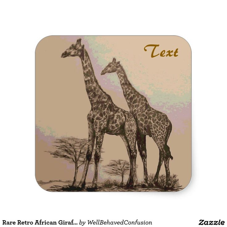Rare Retro African Giraffes in Sepia & Pastels Square ...