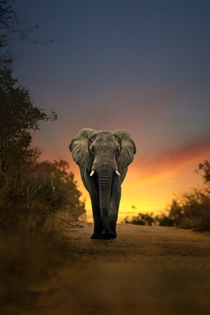 Nature S Great Masterpiece An Elephant The Only Harmless Great Thing John D With Images Elephants Photos Elephant Elephant Photography