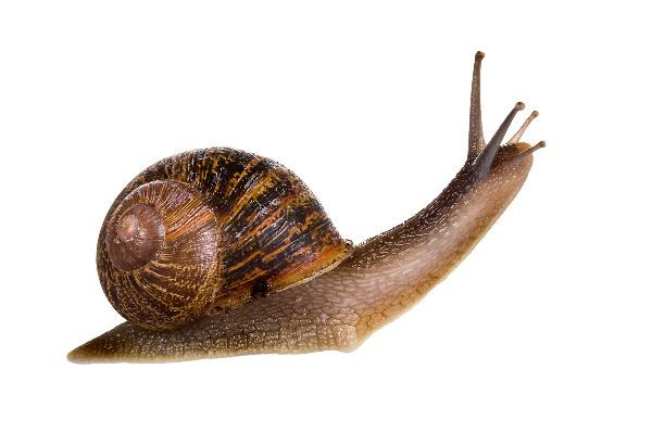 Snail Pictures - Snail Facts and Information