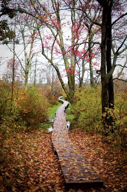 Fall Comes to Connecticut's Litchfield Hills-White Memorial in Litchfield, CT. Yankee Magazine.