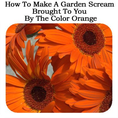 How to make a garden scream brought to you by the color - What makes the color orange ...