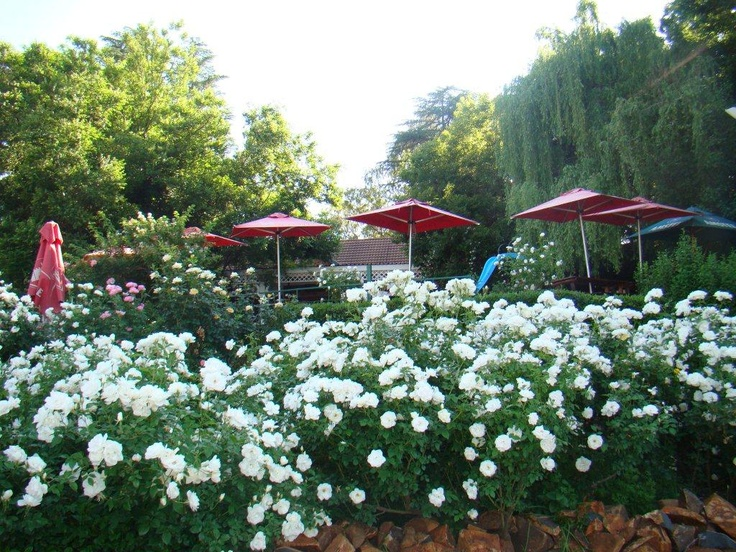 Stonehaven boasts over 1000 rose bushes and is the biggest garden alfresco restaurant in South Africa located on the Vaal River