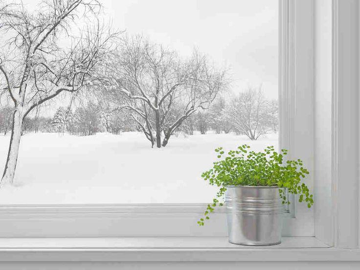 Huonekasvien hoito talvella