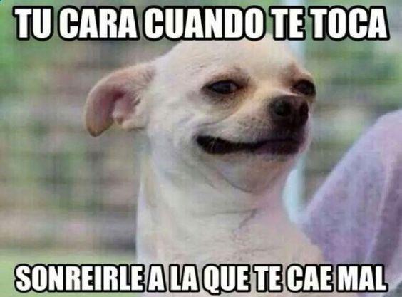 Perro Chihuahua Meme s - Mega Memeces ➬ www.diverint.com/...