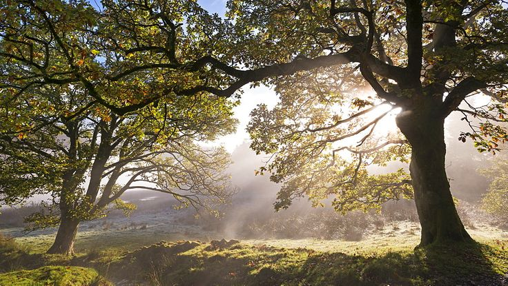 Early morning sunlight burns through mist at Holme Wood near Loweswater, Lake District National Park, Cumbria, England, United Kingdom, Europe - 799-2644