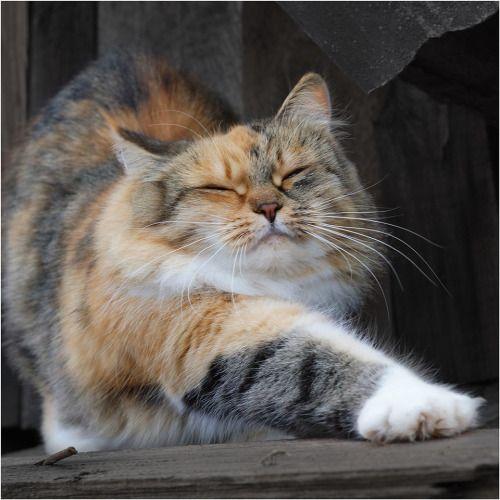 Les 25 meilleures id es de la cat gorie j ai bien dormi sur pinterest costume b b chien - J ai bien dormi ...