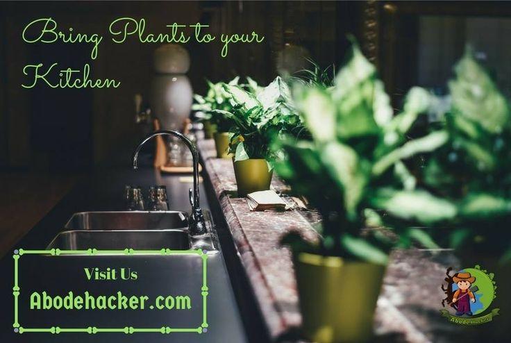 Bring plants to your kitchen www.abodehacker.com #online #plant #abode #kitchen