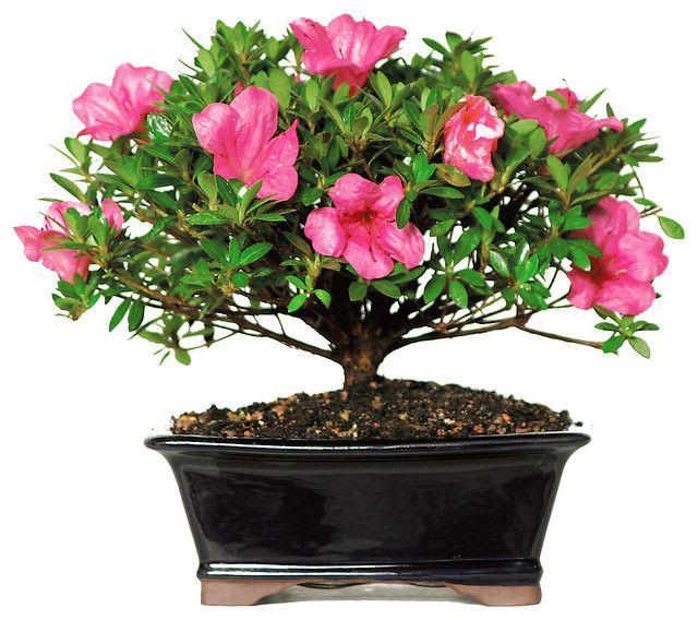 floreria lima| florerias en lima | floreria | enviar flores peru