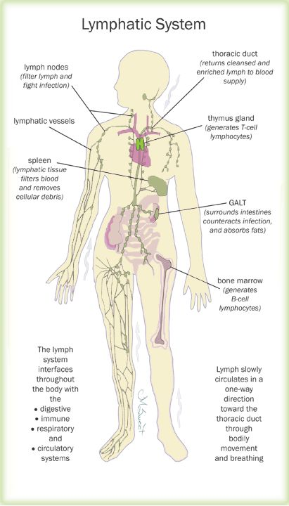 The lymph system and women's health by Marcelle Pick, OB/GYN NP