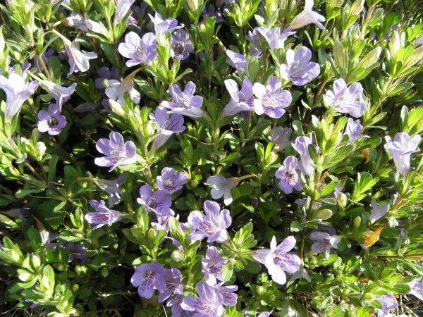 17 Best images about Native FL Plants on Pinterest ...