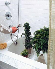 Cleaning Houseplants - Martha Stewart Home & Garden