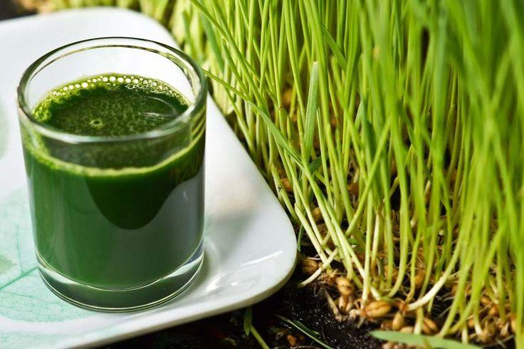 ERBA DI GRANO: la salute è verde!