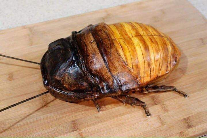 Hissing Cockroach Cake