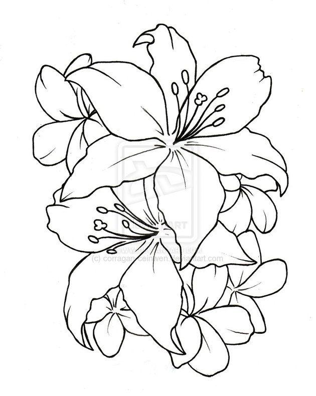 Best 20 Tiger lily tattoos ideas on Pinterest Lillies tattoo