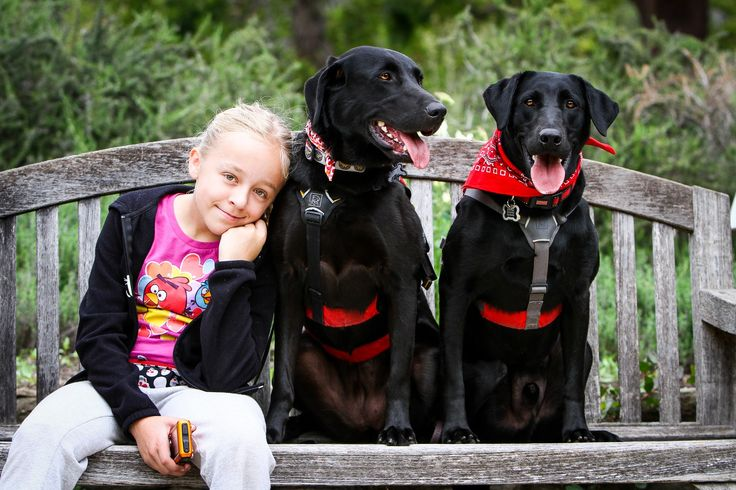 Labradors.com - The Nose Knows: Diabetic Alert Dogs (DADs) In The Family.
