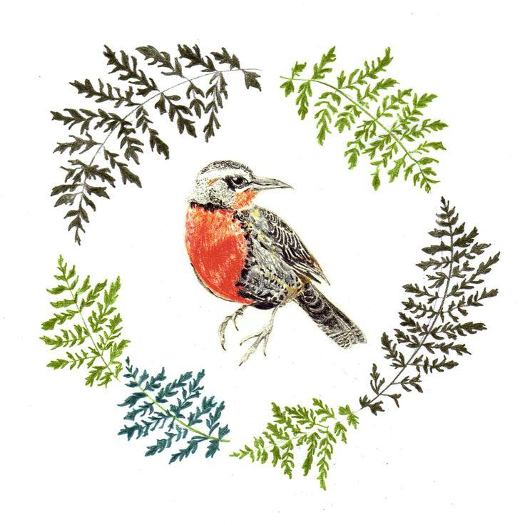 Loica. Serie flora y fauna chilena. Lápiz a color. Por Coco & Co