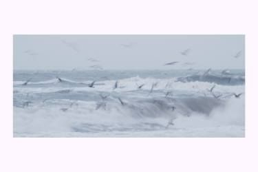Immersed in the salty breeze - Limited Edition 2 of 4