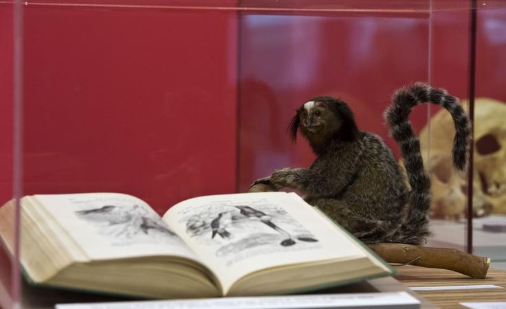 Uno de los muchos libros que comprenden la bibliografía de Darwin.