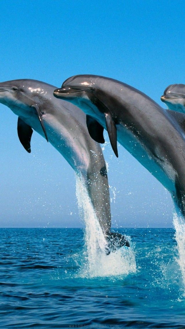 Dolphins dancing in the sea. Please check out my website thanks. www.photopix.co.nz