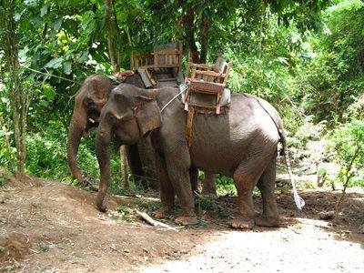elephant-trekking-riding-tour-walking-phuket. Thailand ...