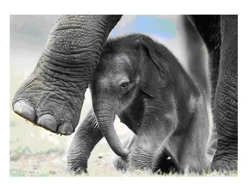 Baby elephant under foot. Dear thing. Wishing him/her a long and happy life free of poachers and the blood ivory trade.