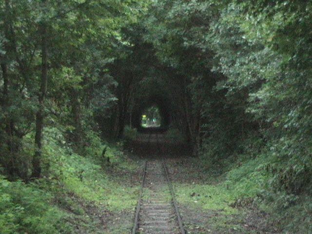 Kisvasút útja a Fekete-völgyben(Börzsöny hegység)