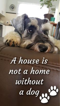 Correction: without a Schnauzer!