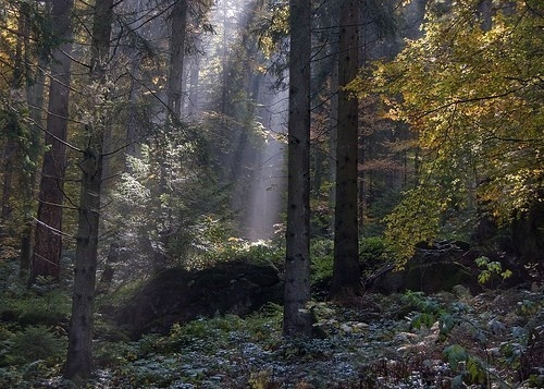 forest forest nature-s-beauty