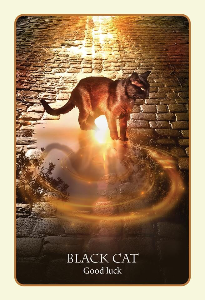 385 Best Images About Oracle Cards On Pinterest