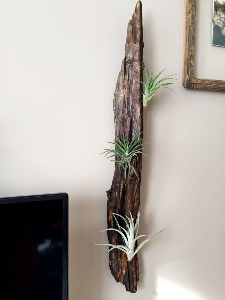 Driftwood wall decor with plant by HolzDinge on Etsy