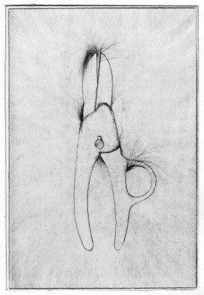 Secateurs from 'Thirty Bones of my Body' portfolio by Jim Dine
