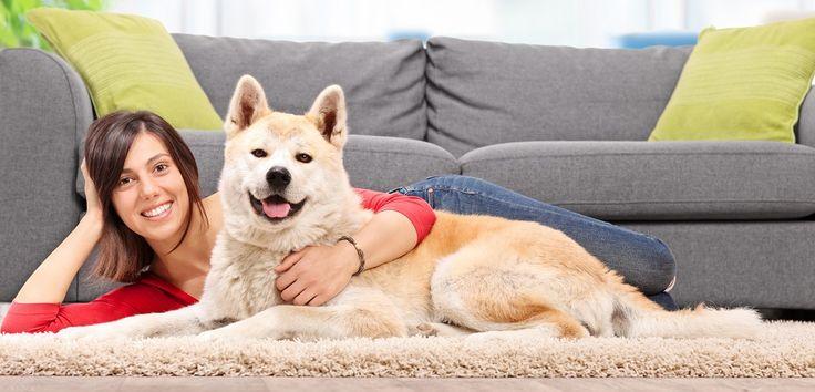 Guia de Adestramento de Cães Passo a Passo - Como ensinar o cachorro fazer as necessidades no lugar certo, parar de morder, parar de latir e muito mais!